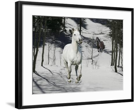 Snow Chase-Bob Langrish-Framed Art Print