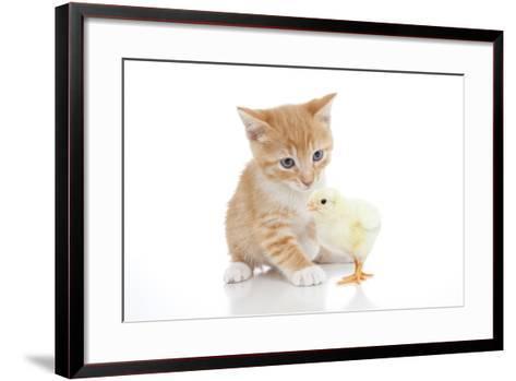 Kittens 025-Andrea Mascitti-Framed Art Print