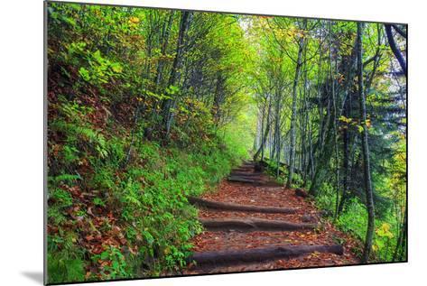 Appalachian Trail 3-Bob Rouse-Mounted Photographic Print