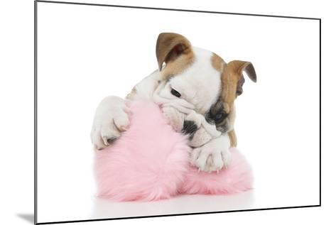 Puppies 057-Andrea Mascitti-Mounted Photographic Print