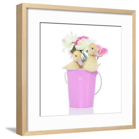 Ducks 005-Andrea Mascitti-Framed Art Print