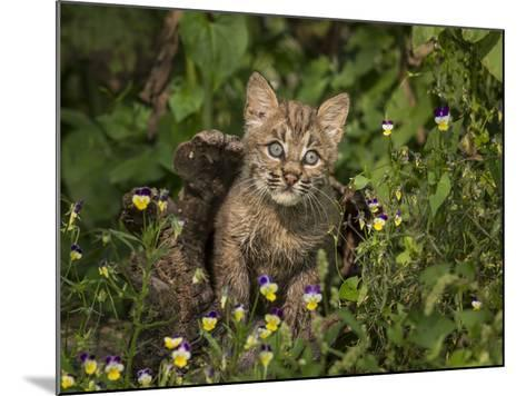 Bobcat Kitten in Wildflowers-Galloimages Online-Mounted Photographic Print