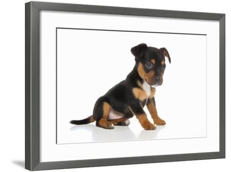 Puppies 064-Andrea Mascitti-Framed Art Print