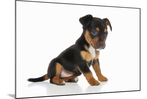 Puppies 064-Andrea Mascitti-Mounted Photographic Print
