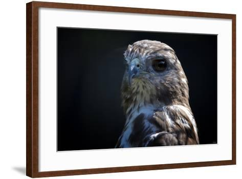 Hawk-Gordon Semmens-Framed Art Print