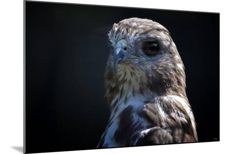 Hawk-Gordon Semmens-Mounted Photographic Print