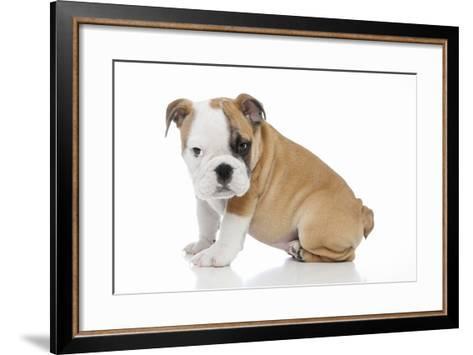 Puppies 056-Andrea Mascitti-Framed Art Print