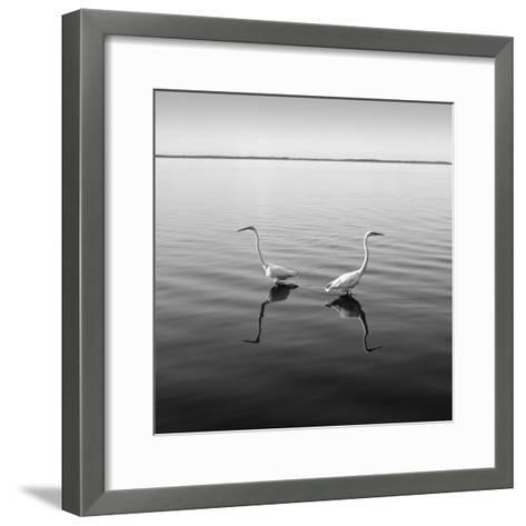 2 Herons-Moises Levy-Framed Art Print