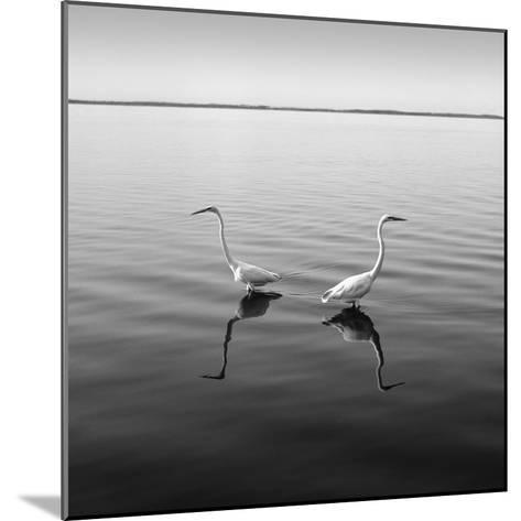 2 Herons-Moises Levy-Mounted Photographic Print