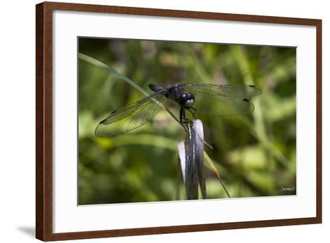 Summer 2012 #252-Gordon Semmens-Framed Art Print