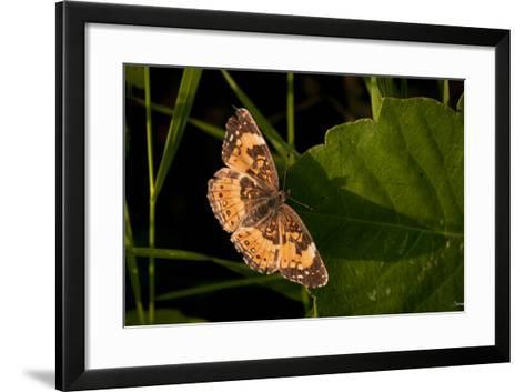 Summer 2012 #211-Gordon Semmens-Framed Art Print