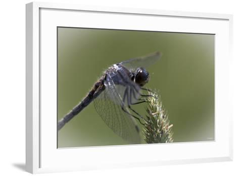 Summer 2012 #236-Gordon Semmens-Framed Art Print