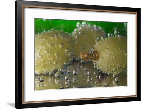 Grapes Underwater-Gordon Semmens-Framed Art Print