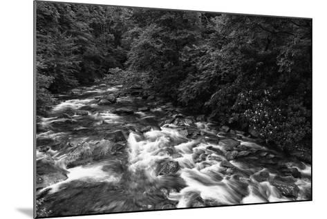 West Prong River-Bob Rouse-Mounted Photographic Print