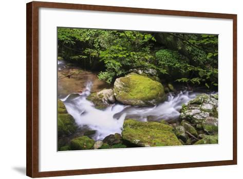 Roaring Fork Stream-Bob Rouse-Framed Art Print