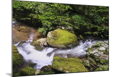 Roaring Fork Stream-Bob Rouse-Mounted Photographic Print