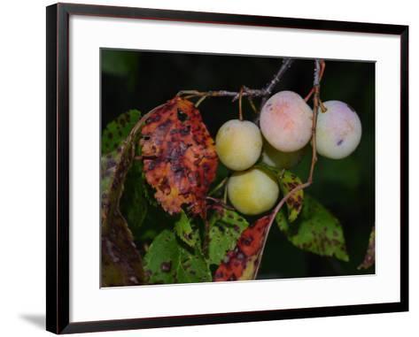 Shades of Nature 61-Gordon Semmens-Framed Art Print