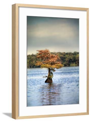 Lonely Little Cypress Tree-Jai Johnson-Framed Art Print