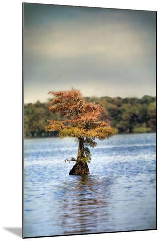 Lonely Little Cypress Tree-Jai Johnson-Mounted Photographic Print