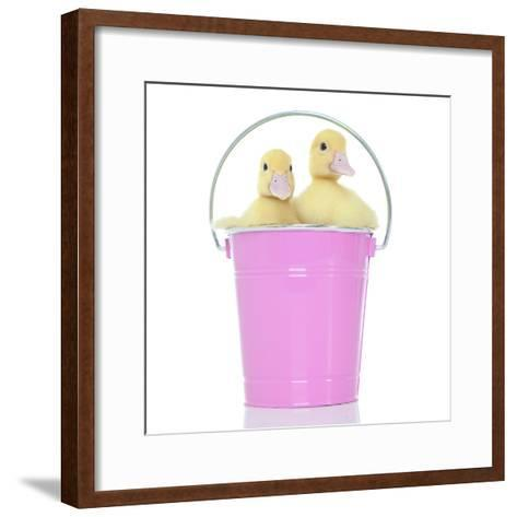 Ducks 012-Andrea Mascitti-Framed Art Print