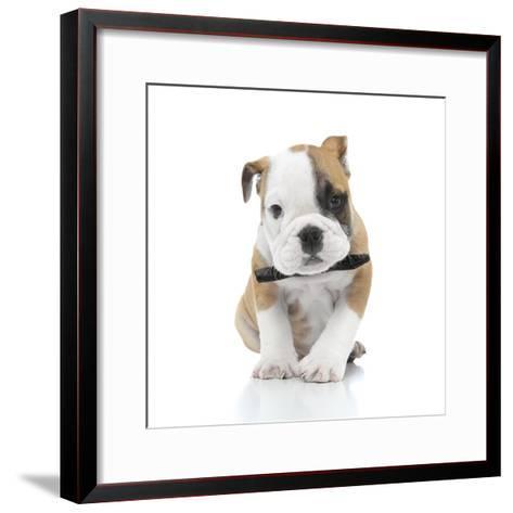 Puppies 021-Andrea Mascitti-Framed Art Print