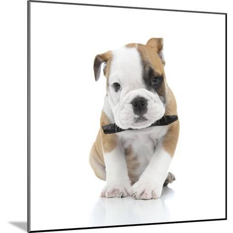 Puppies 021-Andrea Mascitti-Mounted Photographic Print