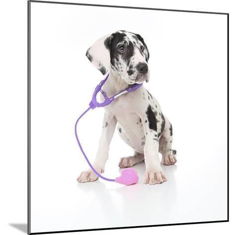 Puppies 026-Andrea Mascitti-Mounted Photographic Print
