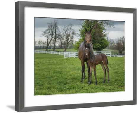 Mare and Foal 2-Galloimages Online-Framed Art Print