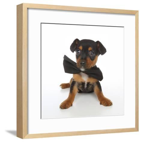 Puppies 045-Andrea Mascitti-Framed Art Print
