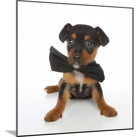 Puppies 045-Andrea Mascitti-Mounted Photographic Print