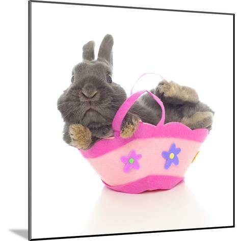 Rabbits 003-Andrea Mascitti-Mounted Photographic Print