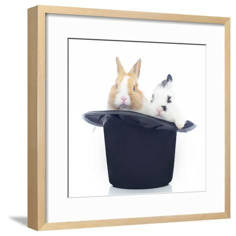 Rabbits 014-Andrea Mascitti-Framed Art Print