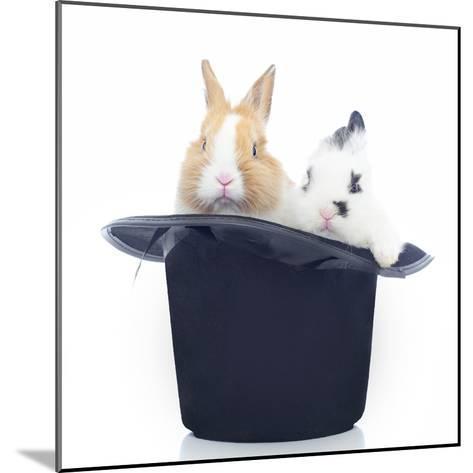 Rabbits 014-Andrea Mascitti-Mounted Photographic Print