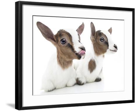 Goats 001-Andrea Mascitti-Framed Art Print