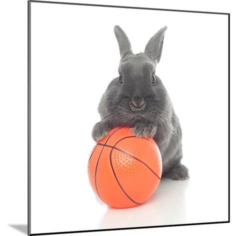 Rabbits 016-Andrea Mascitti-Mounted Photographic Print