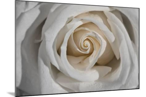 Rose-Gordon Semmens-Mounted Photographic Print