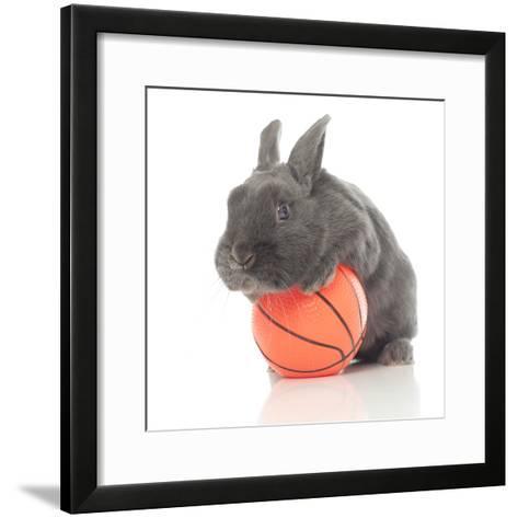 Rabbits 015-Andrea Mascitti-Framed Art Print
