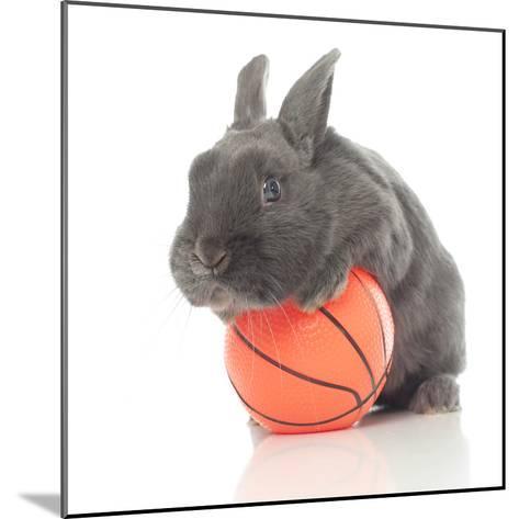 Rabbits 015-Andrea Mascitti-Mounted Photographic Print