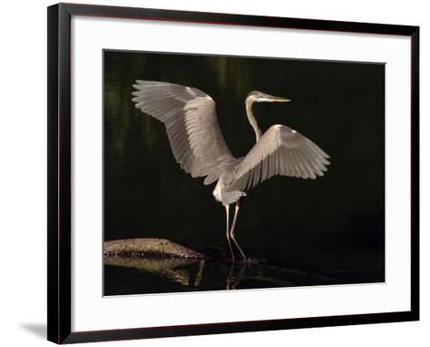 Big Bird-J.D. Mcfarlan-Framed Art Print