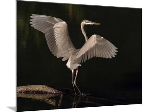 Big Bird-J.D. Mcfarlan-Mounted Photographic Print