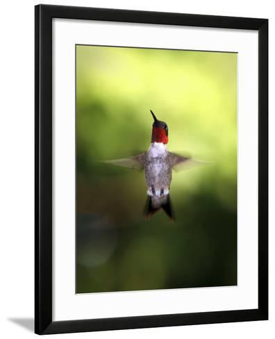 Hummingbird-J.D. Mcfarlan-Framed Art Print