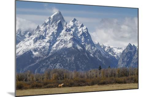 A Horse in Front of the Grand Teton-Galloimages Online-Mounted Photographic Print