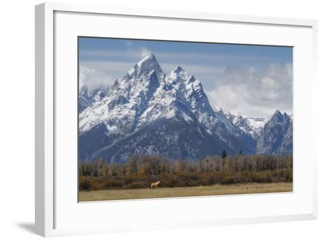 A Horse in Front of the Grand Teton-Galloimages Online-Framed Art Print