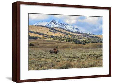 Bison by Electric Peak (YNP)-Galloimages Online-Framed Art Print