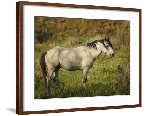 Wild Horse-Galloimages Online-Framed Art Print