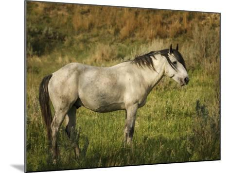 Wild Horse-Galloimages Online-Mounted Photographic Print
