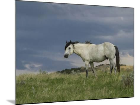 Wild Horse - Stallion (Storm)-Galloimages Online-Mounted Photographic Print