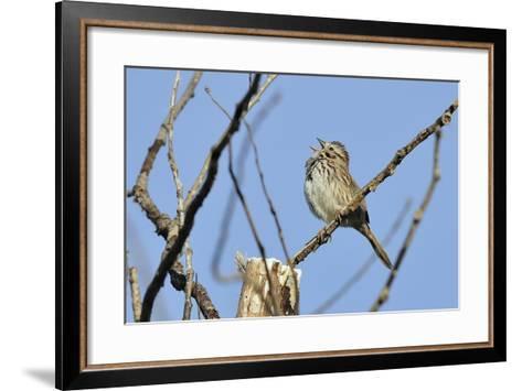 Spring Flowers-Gordon Semmens-Framed Art Print