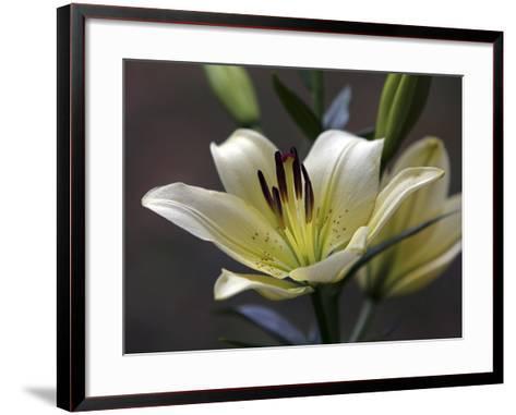 Lily #2-J.D. Mcfarlan-Framed Art Print