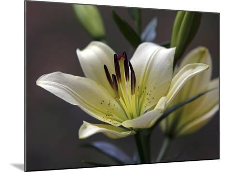Lily #2-J.D. Mcfarlan-Mounted Photographic Print